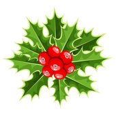 Christmas holly. Vector illustration. — Stock Vector