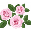 Three pink roses with leaves on white. Vector illustration. - Stock Vector