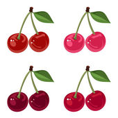 Set of four bunches of cherries. Vector illustration. — Stock Vector