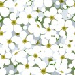 Seamless background with small white flowers. Vector illustration. — Stock Vector