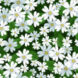 Seamless background with stellaria flowers. Vector illustration. — Stock Vector