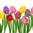 Horizontal seamless background with colored tulips. Vector illustration. — Stock Vector