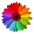 Gerbera flowers with multicolored petals. Vector illustration. — Stock Vector