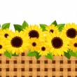 Horizontal seamless background with sunflowers and wicker. Vector illustration. — Stock Vector #24917683