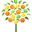 Abstract tree with various citrus fruits. Vector illustration. — Stock Vector