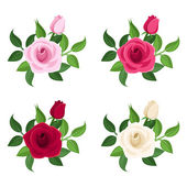 Set of four colored roses. Vector illustration. — Stock Vector