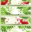 Four vector banners with rowan branches (468x120px). — Stock Vector #27126159