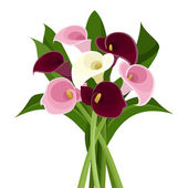 Bouquet of colored calla lilies. Vector illustration. — Stock Vector