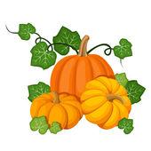 Three orange pumpkins. Vector illustration. — Stock Vector