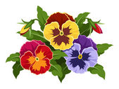 Colorful pansy flowers. Vector illustration. — Stock Vector