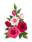 Branch of red and pink roses, buds and leaves. Vector illustration. — Stock Vector