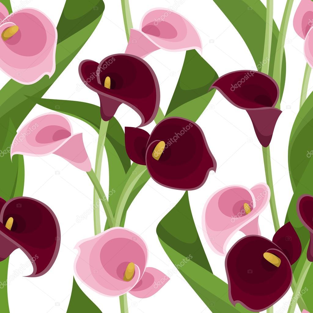 Purple and White Calla Lily