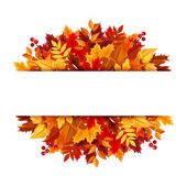 Autumn leaves background. Vector illustration. — Stock Vector