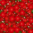 Christmas seamless background with red poinsettia flowers. Vector illustration. — Stock Vector