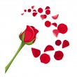 Red rose and petals. Vector illustration. — Stock Vector #37227713