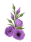 Purple lisianthus flowers. Vector illustration. — Stock Vector