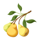 Pears on a branch. Vector illustration. — Stock Vector