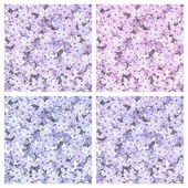 Set of seamless backgrounds with lilac flowers. Vector illustration. — Stock Vector