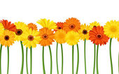 Horizontal seamless background with gerbera flowers. Vector illustration. — Stock Vector