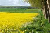 France, a rape field in Maudetour en Vexin — Stock Photo