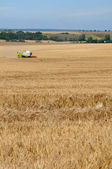 France, Fremainville, field in Val d Oise — Foto Stock