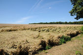 France, wheat field devastated by storm in Vigny — Stock Photo