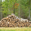 Quebec, cutted trunk in a forest — Stock Photo #16255651