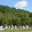 Canada, Quebec, cemetery of Tadoussac — Photo #17977735