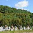 Stock Photo: Canada, Quebec, cemetery of Tadoussac