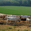 Stock Photo: Normandie, Countryside in Lisors