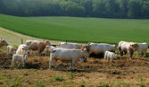 Normandie, Countryside in Lisors — Stock Photo