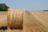 France, a wheat field in Brueil en Vexin — Stock Photo