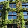 France, a green wall in Paris — Stock Photo #20132187