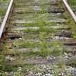 Stock Photo: Old railways in the country