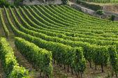 Gironde, vineyard of Saint Emilion in Aquitaine — Foto Stock