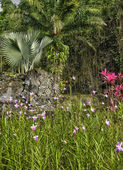 France, the picturesque Habitation Anse Latouche garden in Marti — Stock Photo