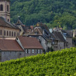 Vineyard of Riquewihr in Alsace — Stockfoto