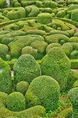 Perigord, the picturesque garden of Marqueyssac in Dordogne — Stock Photo