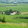 Perigord, the vineyard of Monbazillac in Dordogne — Stock Photo