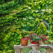 Detail of a small garden in Perigord — Stock Photo