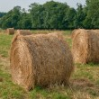 Bales of straw in a field in Normandie — Stock Photo