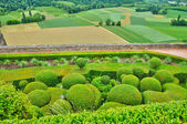 France, picturesque garden of Marqueyssac in Dordogne — Stock Photo