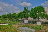 France, allotment garden in Les Mureaux — Stock Photo