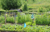France, allotment garden in Les Mureaux — Stock Photo