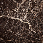 Roots in a soil — Stock Photo