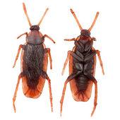 Fałszywe gumy karalucha — Zdjęcie stockowe