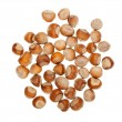 The heap of hazelnuts — Stock Photo