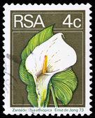 Poštovní známce z jihoafrické republiky — Stock fotografie
