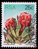 гербовая марка с южно-африканской республики — Стоковое фото