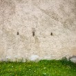 Stock Photo: Wall and dandelions